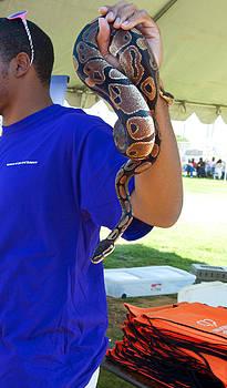 Affini Woodley - Snake
