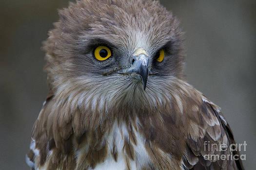 Heiko Koehrer-Wagner - Snake Eagle 1