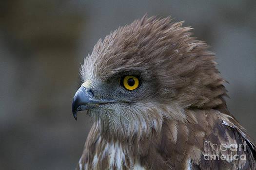 Heiko Koehrer-Wagner - Snake Eagle 3
