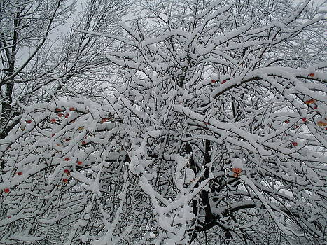 Snow Covered Crab Apples by Ted Kitchen