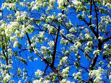 Pauli Hyvonen - Snow Flowers
