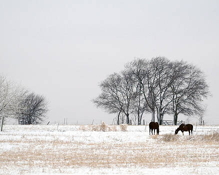 Snow Horses by David Chalker