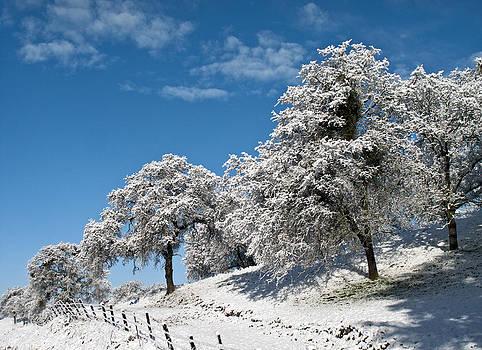 Snow in Yokohl Valley by Wayne Powell