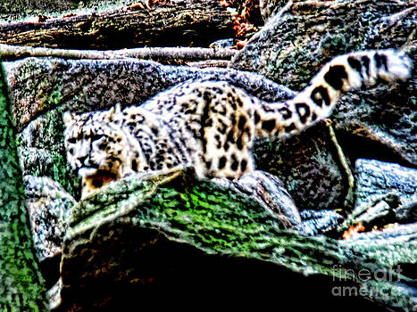 Anne Ferguson - Snow Leopard in the Rocks