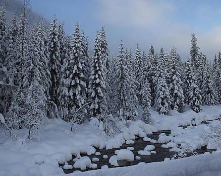 Snow Pines by Sylvia Hart