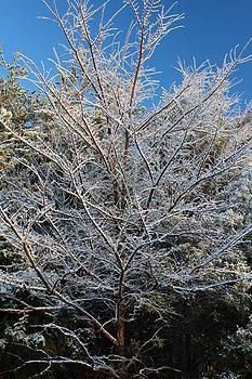 Snow Tree by Bob Whitt