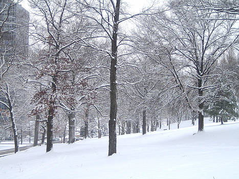 Snow Tree by JG Boccella