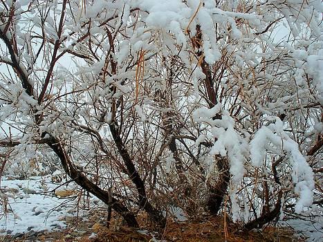 SnowBound by Jonathan Barnes