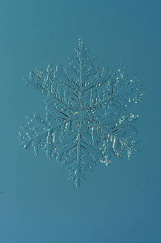 Snowflake by Dick Todd