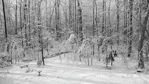 Snowy Backyard by George Lovelace