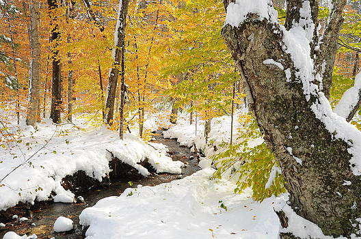 Snowy Brook by Gerald Hiam