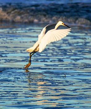 Snowy Egret by Walt Jackson