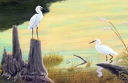 Jim Ziemer - Snowy Egrets