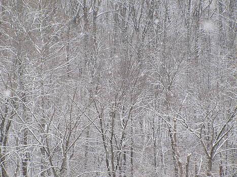 Snowy Forest by Jennifer Weaver