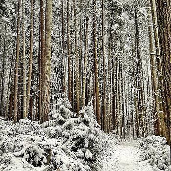 Snowy Landscape by Chris Fabregas