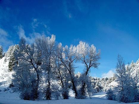 Snowy Morning by FeVa  Fotos