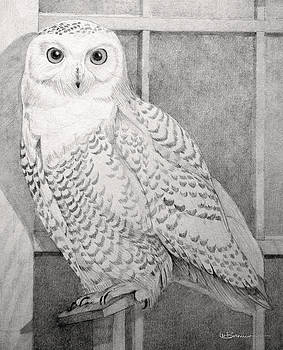 Snowy Owl by Leslie M Browning