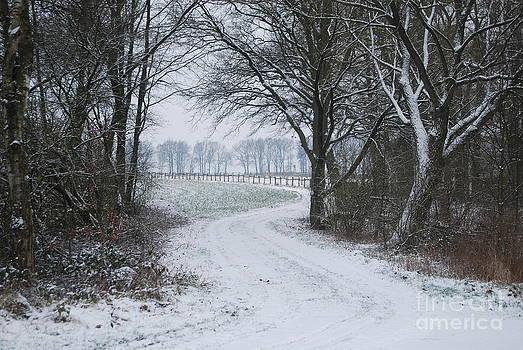 Snowy Path by Nancie Teresa