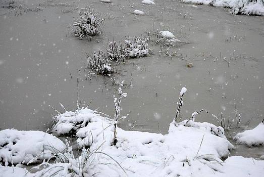 Rachael Shaw - Snowy Pond
