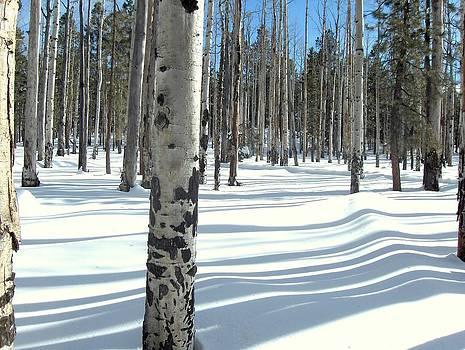 Snowy Shadows by Donna Spadola
