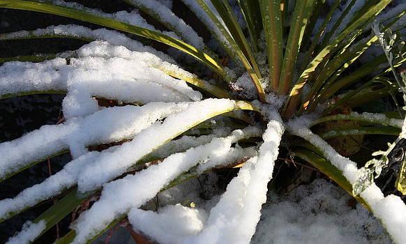 Annie Babineau - snowy spikes