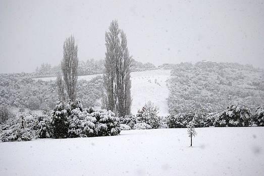 Rachael Shaw - Snowy Strip