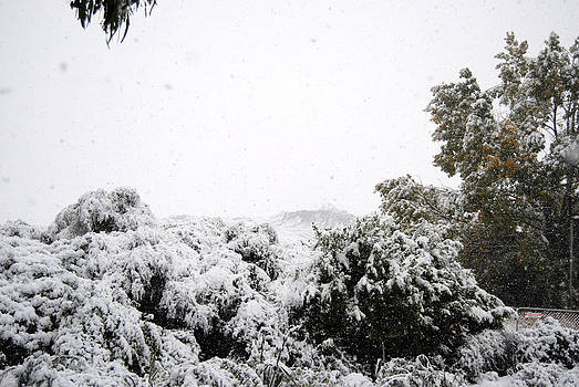 Rachael Shaw - Snowy View