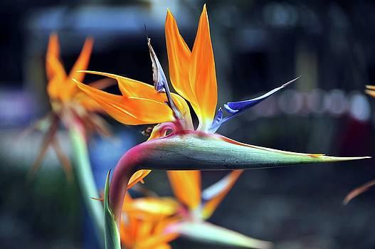 So Colourful by Boyd Nesbitt