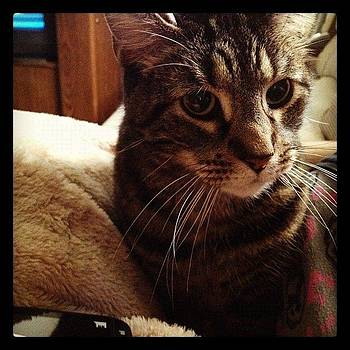 So Handsome! I Love This Cat. #cutest by Brooke Kozlowski