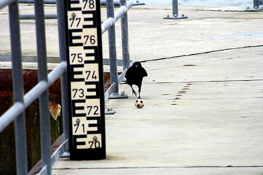 Soccer Crow by Patrick Anderson