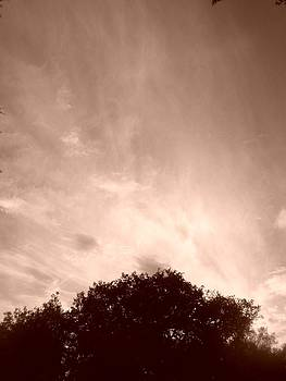 Soft Amber Sky by LDPhotography Stephanie Armstrong