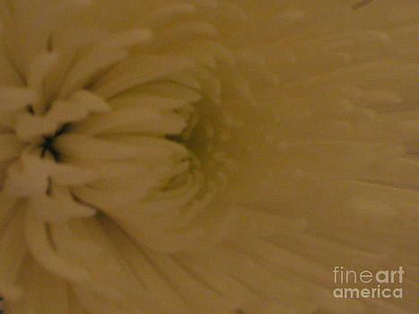 Soft and White by Donna Renier