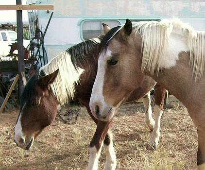 Kathleen Heese - Soft Horses