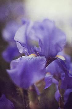 Soft Iris by Brandy Ford
