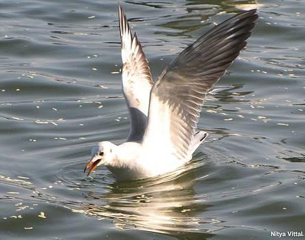 Soft landing by Nitya Vittal