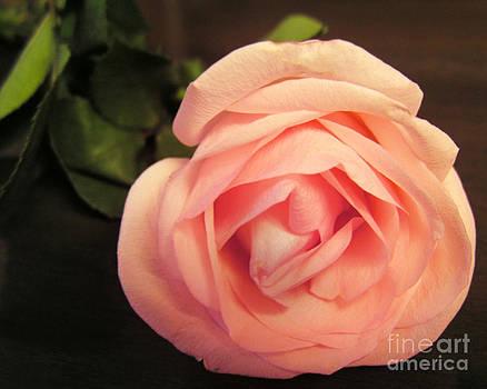 Anne Ferguson - Soft Rose