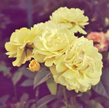 Soft Yellow by Cathie Tyler