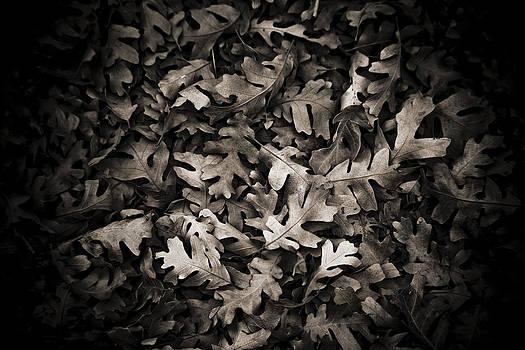 Marilyn Hunt - Softly Fallen Leaves