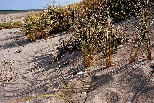 Marysue Ryan - Solitary Beach