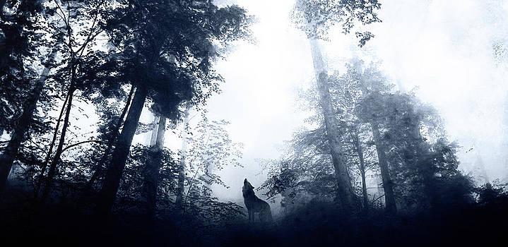Solitary by Jarno Lahti