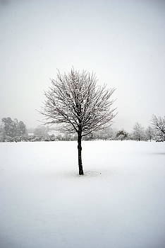Rachael Shaw - Solitary Snow Tree