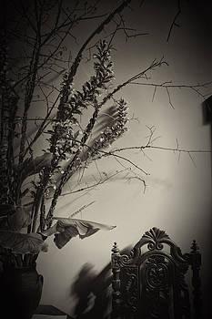 Solitude by John Monteath