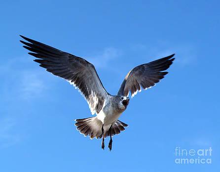 Solo Flight by Patricia Griffin Brett