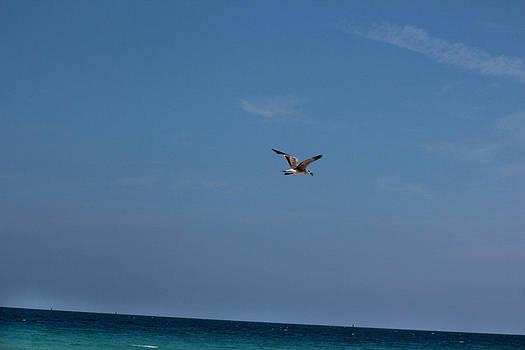 Solo Flight by Zahid Mian
