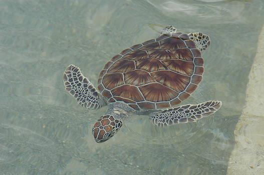 Stacey Robinson - Solo Swim