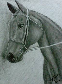Soloman by Tami Bush
