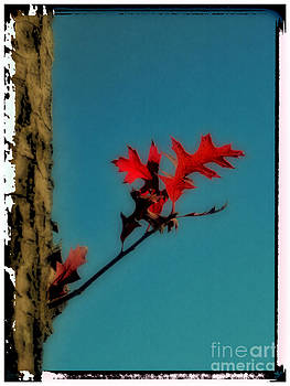 Some Red Leaves by Jeff Breiman