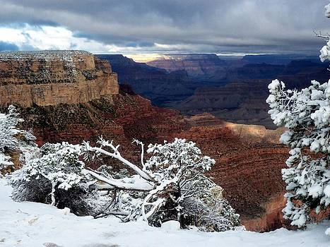 South Rim by Carrie Putz