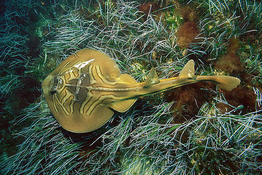 Kevin Deacon - Southern Fiddler Ray