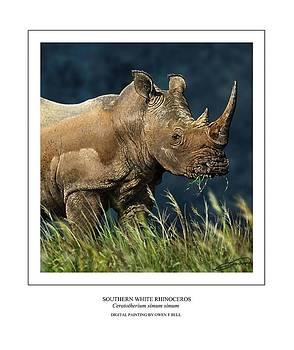 Southern White Rhino by Owen Bell